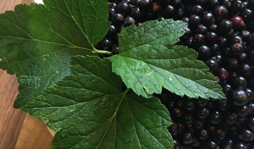 Zwarte bes – tonicum voor de nieren